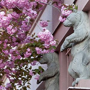 Тур «Цвітіння сакури» та аква-тур «Скупайся в Закарпатті»