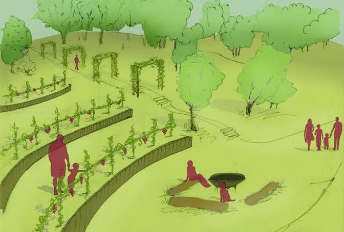 У парку «Знесіння» з'явиться виноградний сад