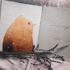 Розмова «Чому книжка-картинка – не книжка з картинками?»