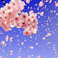 Концерт «Весняний вітер»