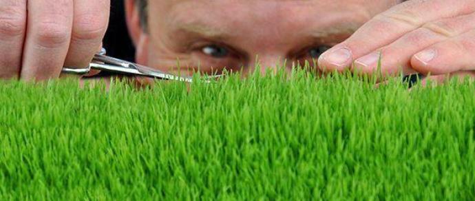 Як зробити газон ідеальним: садові ножиці для трави