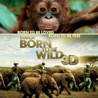 Фільм «Народжені бути вільними»