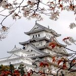 Афіша Виставка «Японія. Традиція краси»