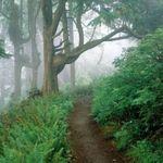 Афіша Дитяче тематичне заняття «Лісова пригода»