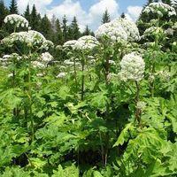 Науково-популярна лекція «Зміна клімату та інвазія рослин як виклик біорізноманіттю та людині»