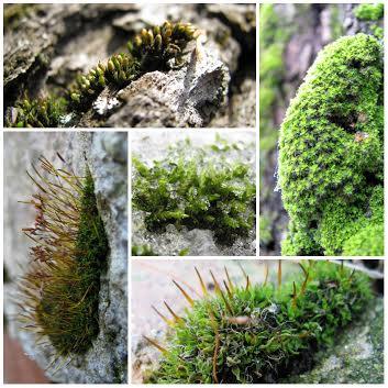 Лекція «Світ мохів: рослини-екстремали»