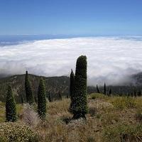 Лекція «Подорож на вулкан: геологія, рослинний і тваринний світ острова Тенеріфе (Канари)»
