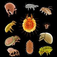 Лекція «Мікросвіт панцирних кліщів: життя, про існування якого мало хто здогадується»
