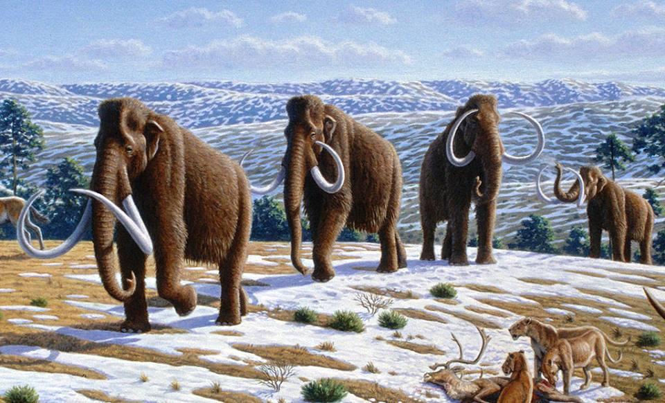 Льодовикова епоха настає влітку: Природознавчий музей відкриває експозицію з мамутом та носорогом