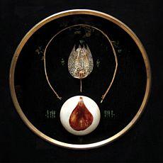 Виставка Мар'яна Пирога «Нетлінні мощі ботанічних сьятих»