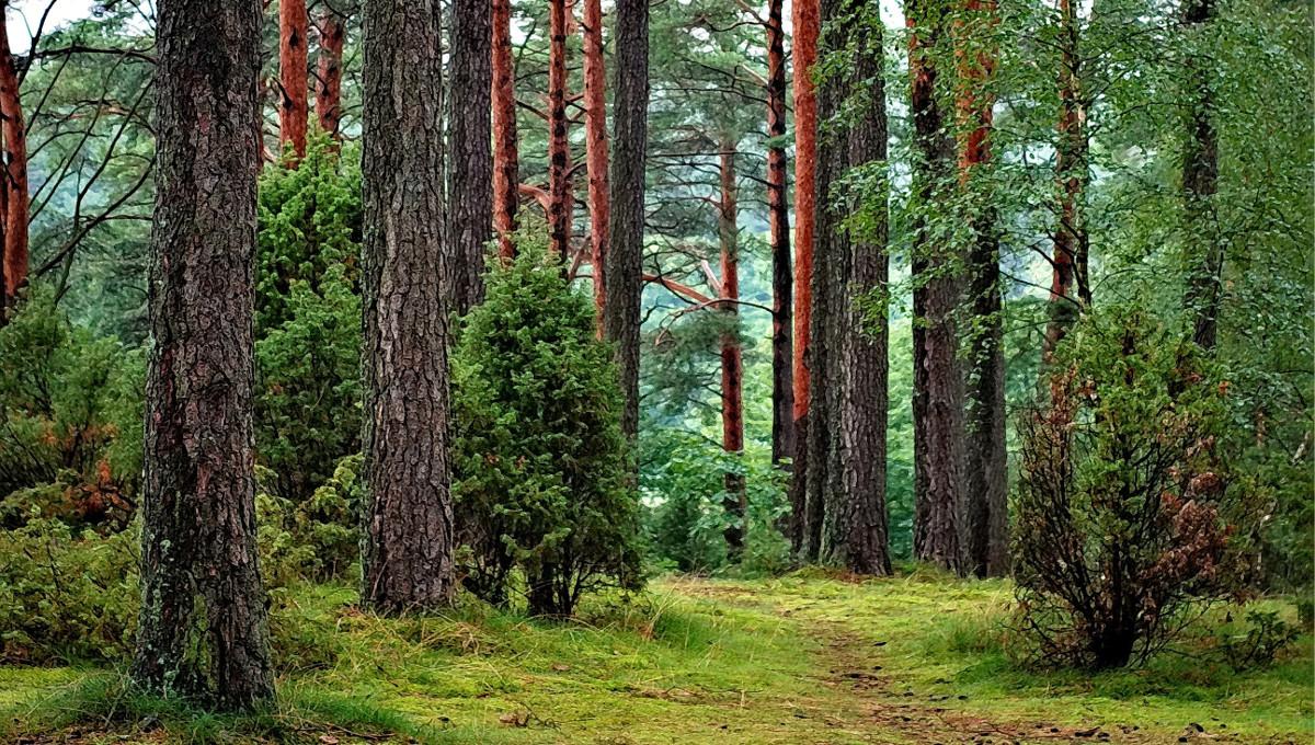 Збираємось на прогулянку до лісу