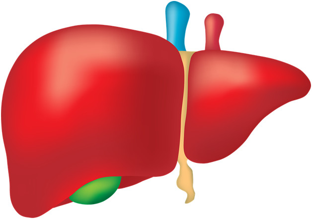 Як використовують Ессенціалє в терапії алкогольної хвороби печінки
