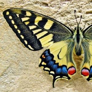 Виставка «Метелики»