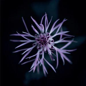 Виставка світлин Андреаса Веннінґера Cold Flowers